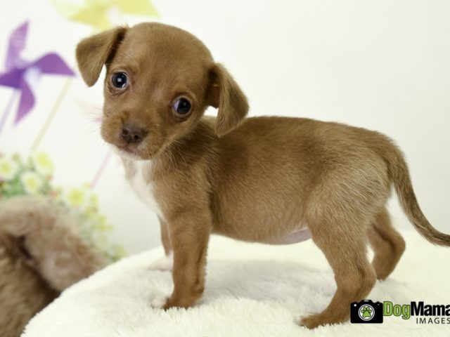 K9 Rescue and Rehoming Puppy Shower